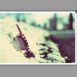 Ampliar una imagen utilizando Fancybox 1.3.4
