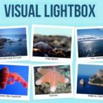 Galería de imágenes con VisualLightBox